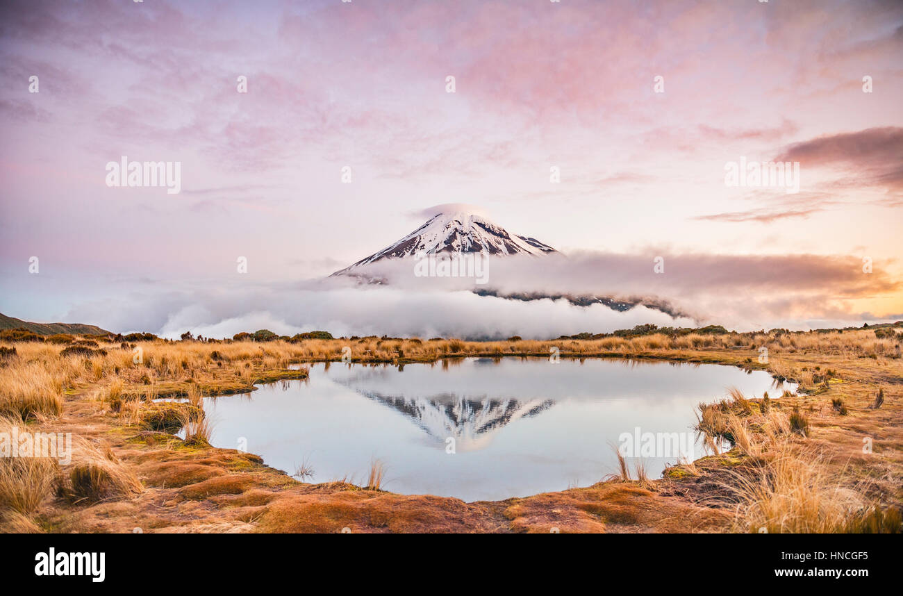 Reflection in Pouakai Tarn, stratovolcano Mount Taranaki or Mount Egmont at sunset, Egmont National Park, Taranaki, - Stock Image