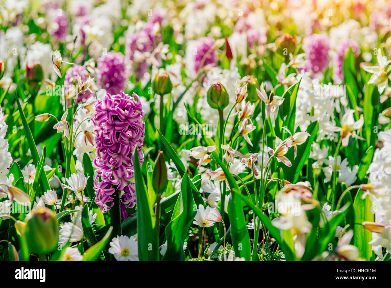 Flower flowerbeds in the park - Stock Image