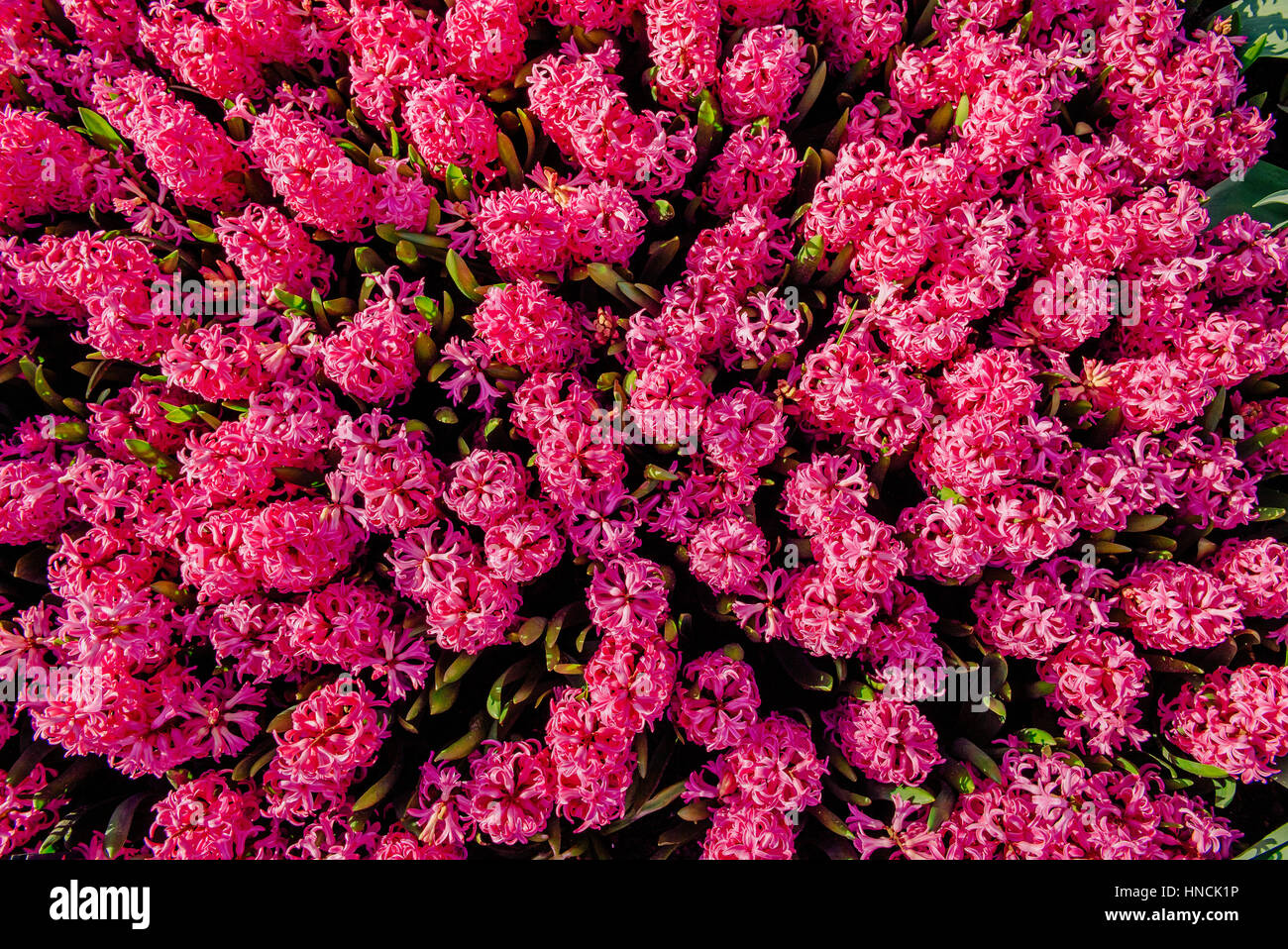Flower flowerbeds in the park. - Stock Image
