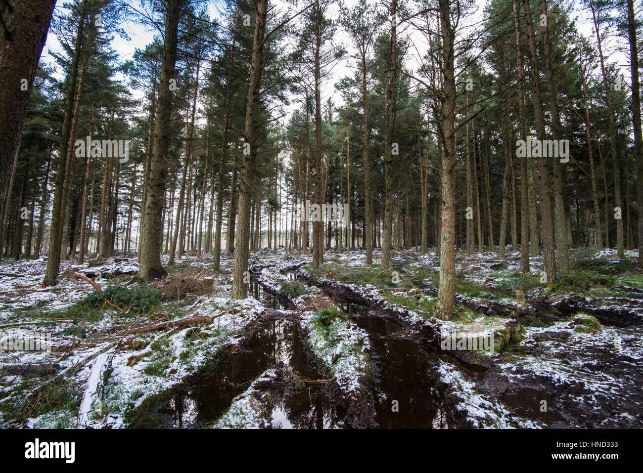 Anderson Wood, Hazlehead Park - Stock Image