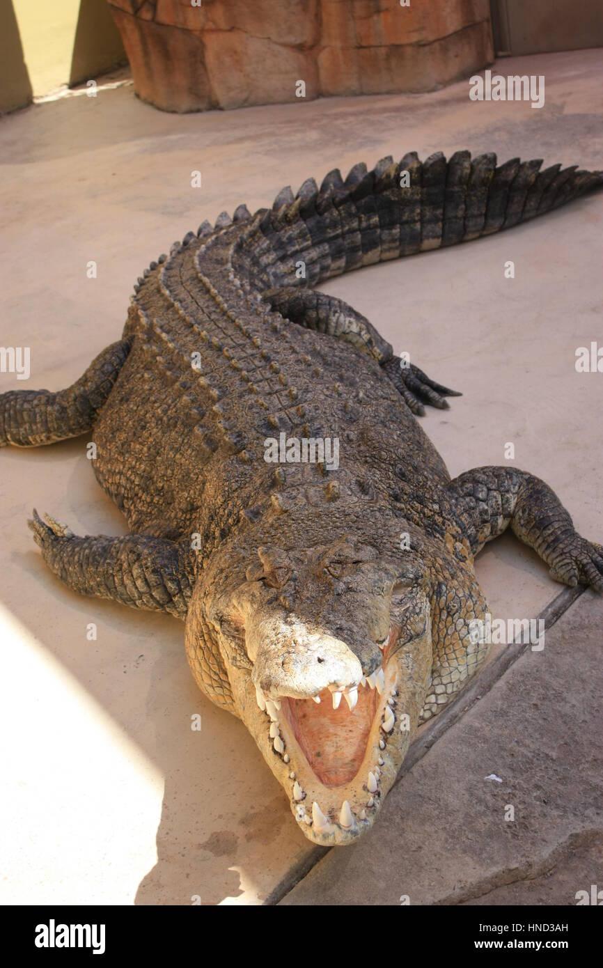how to watch crocodile dundee in australia