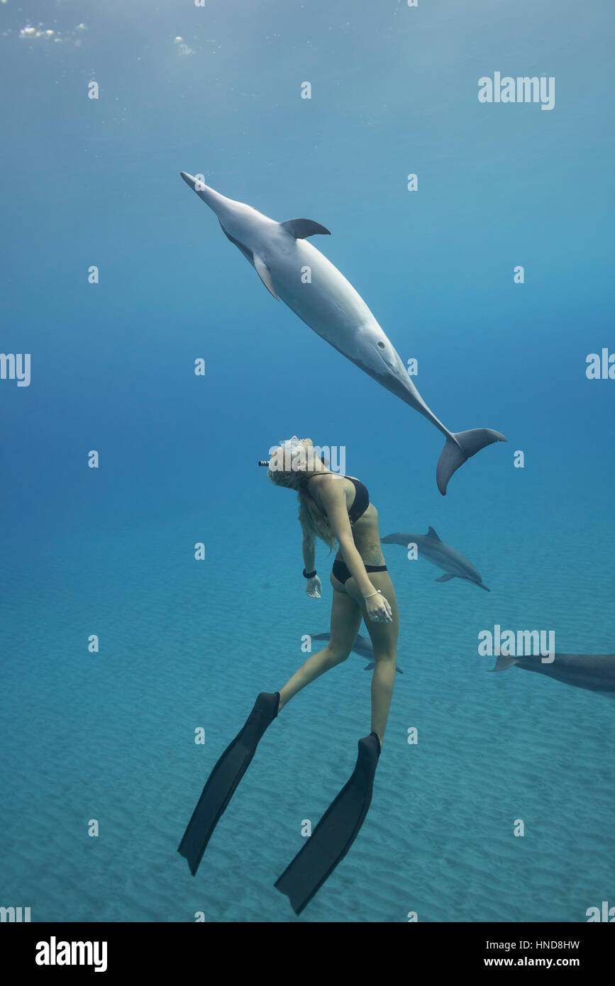 Emily Sepeta swims with Hawaiian spinner dolphins or Gray's spinner dolphin, Stenella longirostris longirostris, - Stock Image