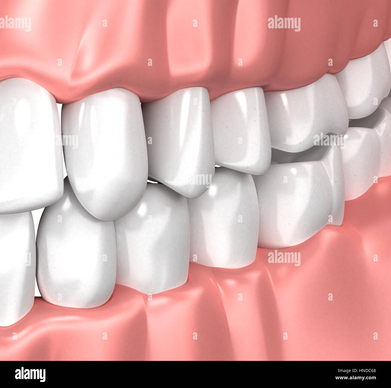 Teeth Gum Human Mouth Anatomy - 3d illustration Stock Photo ...