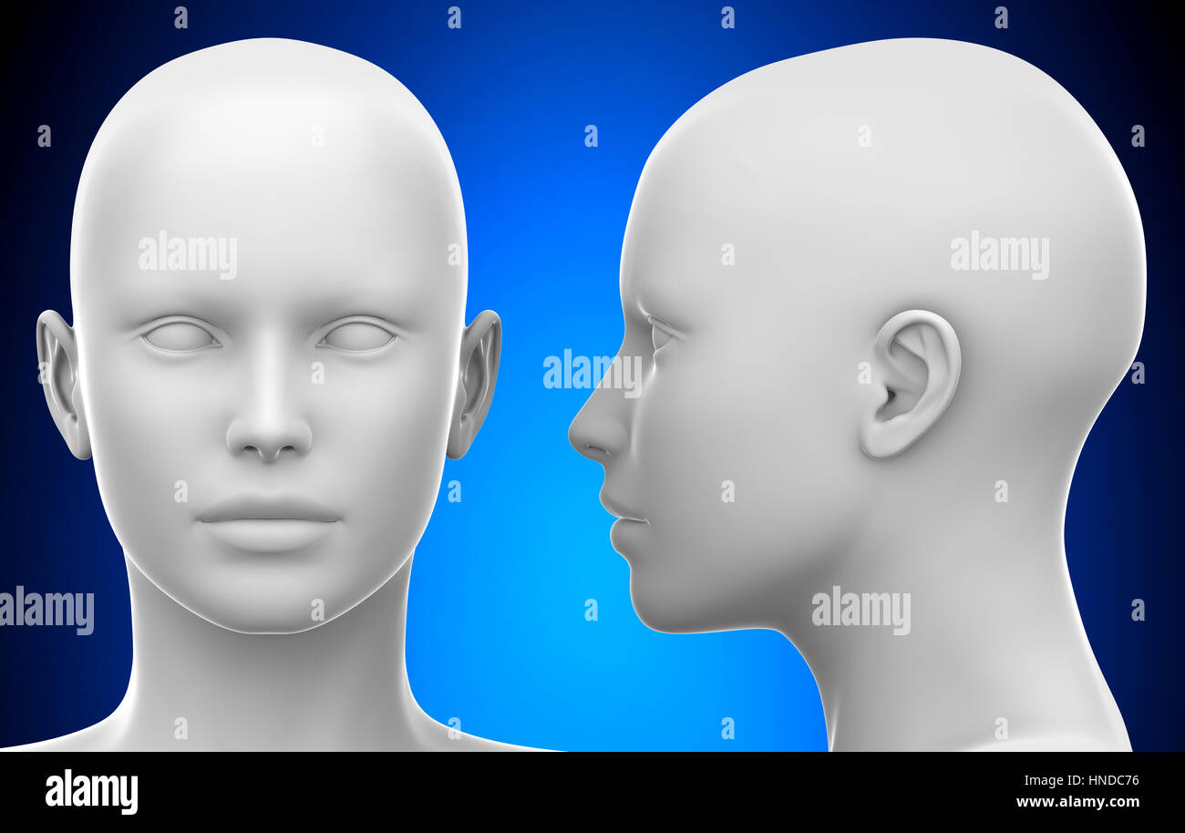 blank white female head side and front view 3d illustration stock
