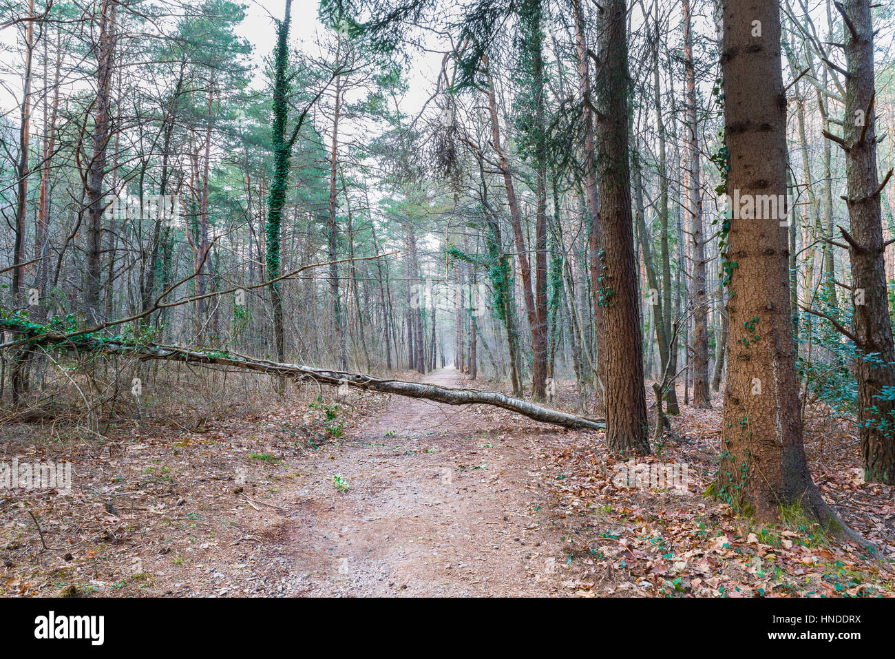 Concept of unexpected obstacle in our life and in our path. Obstacle in isolated place to be faced alone; a loss - Stock Image