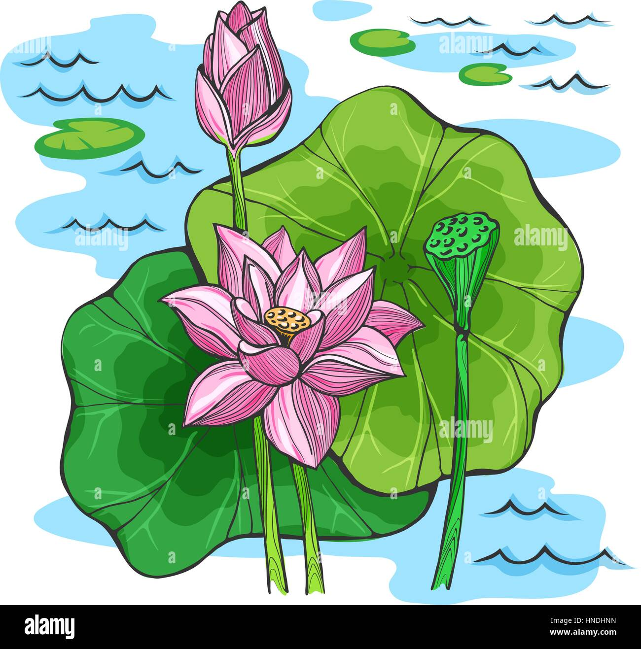 Vector colored sketch lotus flowers stock vector art illustration vector colored sketch lotus flowers mightylinksfo