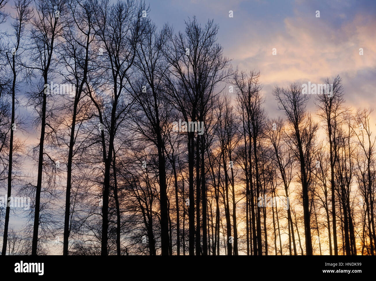 Trees, clouds and sunset. Mission, BC, Canada - Stock Image