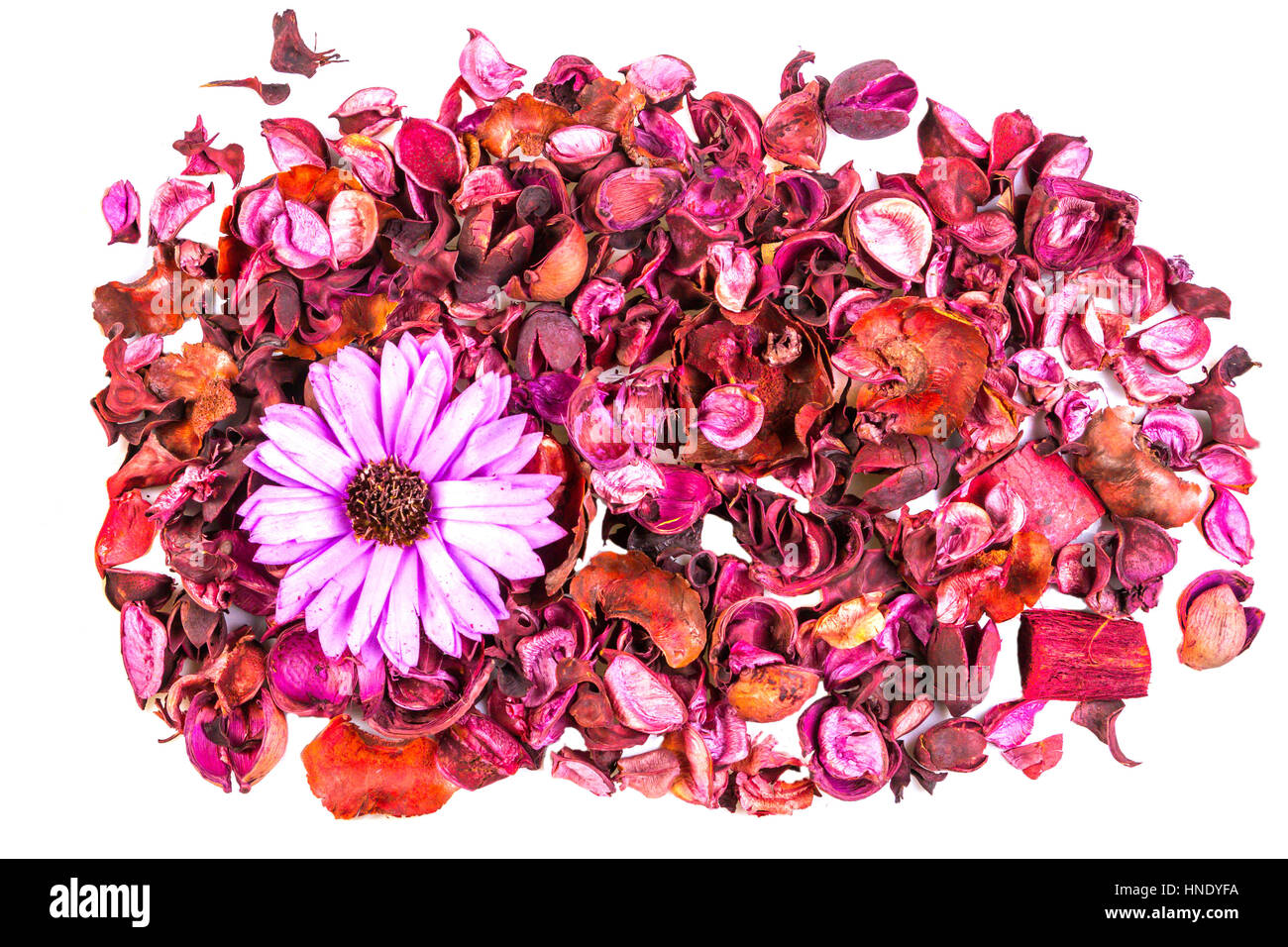 Dry flowers and leaves on white background. Top view, flat lay. - Stock Image