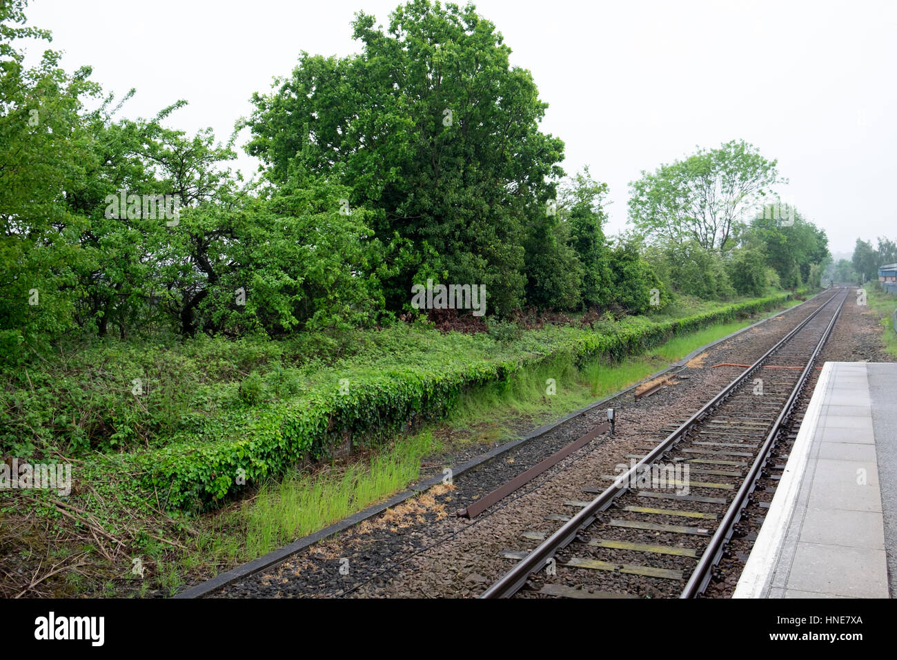 Overgrown unused railway platform at Melton on the single track Lowestoft to Ipswich East Suffolk branch line. - Stock Image