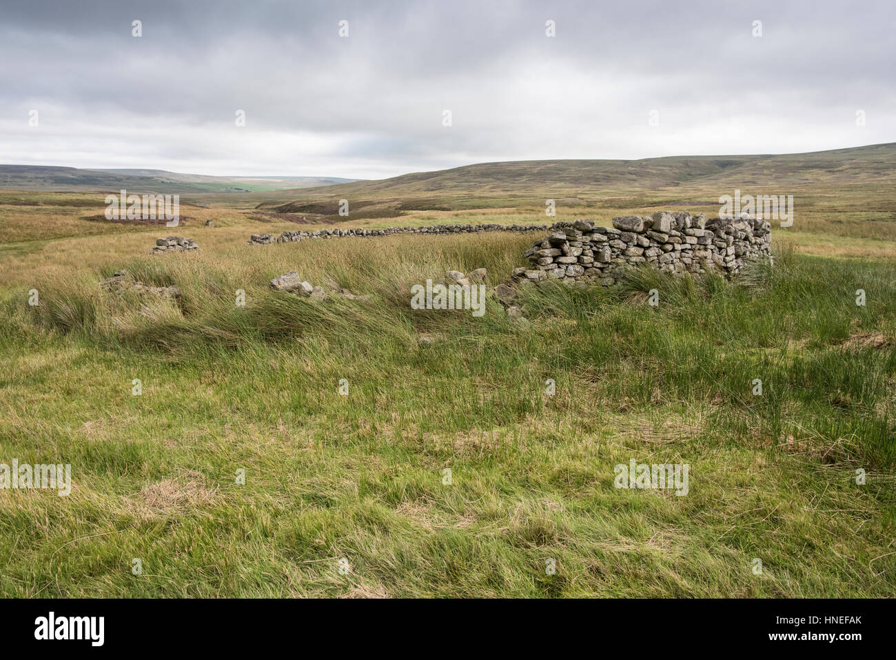 Derelict sheepfold of a type called a stell, at Little Red Gill, Arkengarthdale. Built as a shelter from snow and Stock Photo