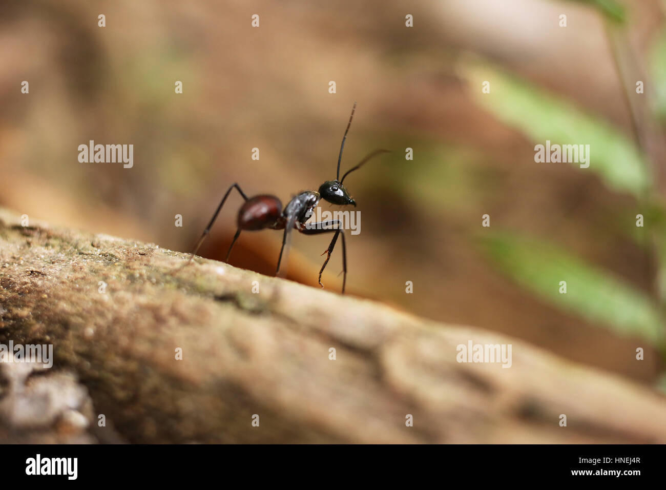 Ants Life Stock Photos Ants Life Stock Images Alamy
