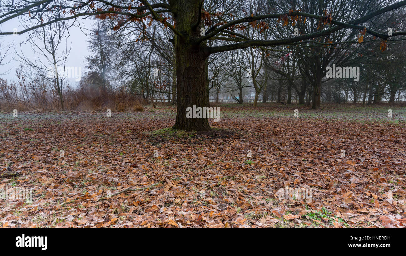 Bare tree with leaves on the ground - Stock Image