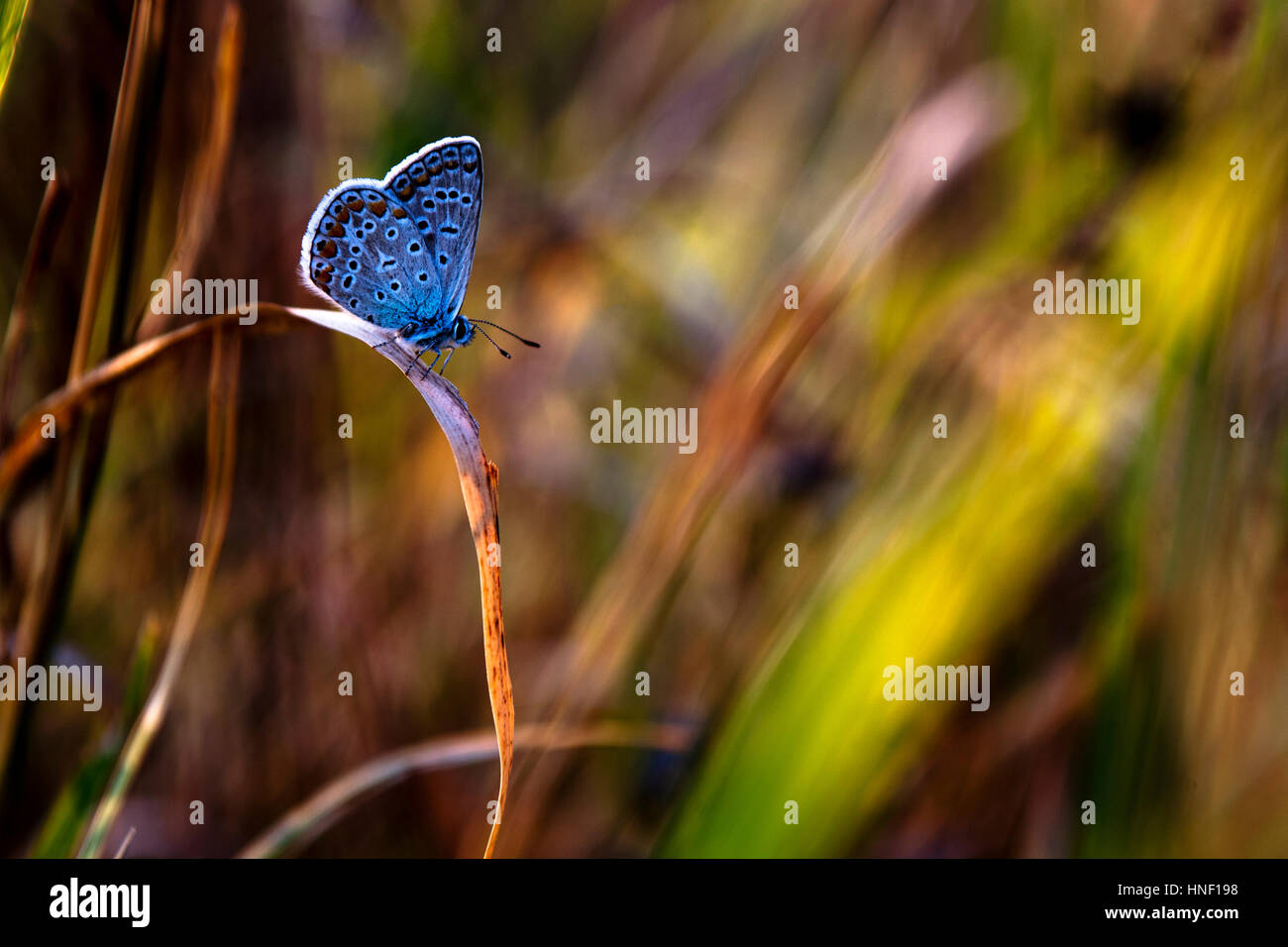 Beautiful butterfly - Stock Image
