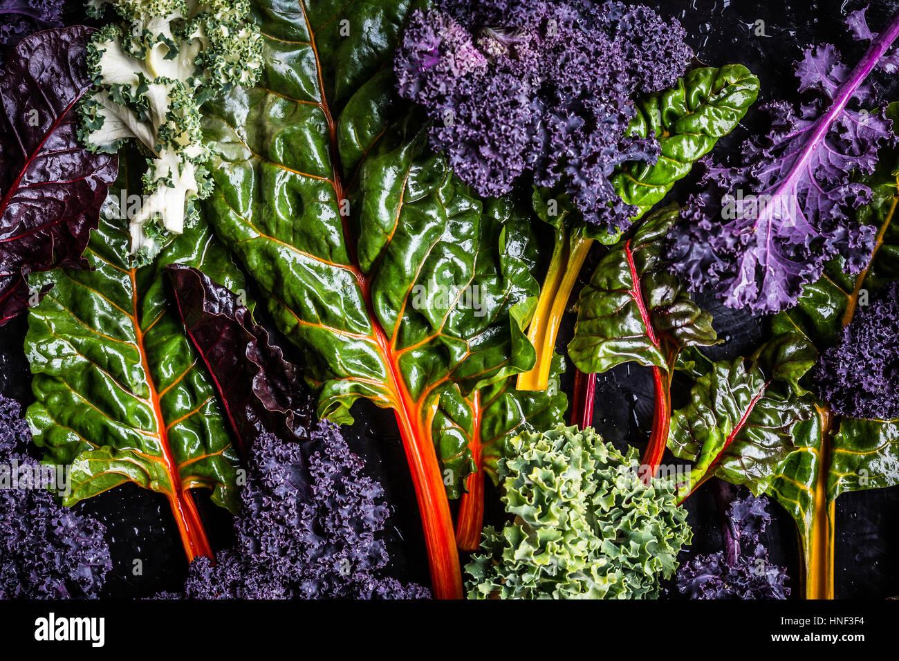 Freshly Harvested Kale Vegetable Varieties - Stock Image