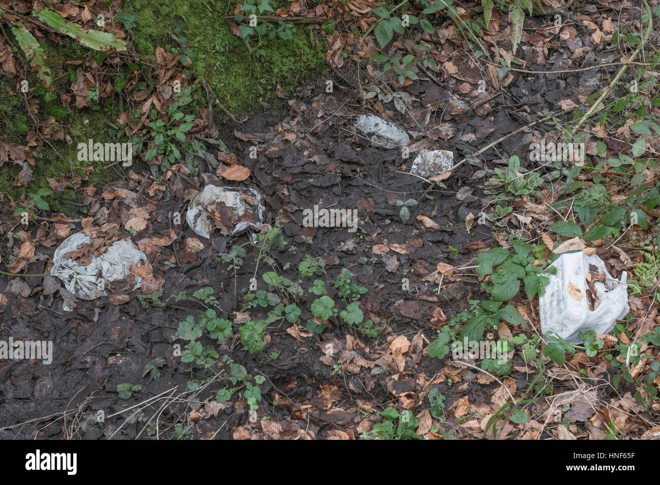 Environmental pollution in form or roadside and hedgerow rubbish discarded by the public. Plastic waste, war on - Stock Image