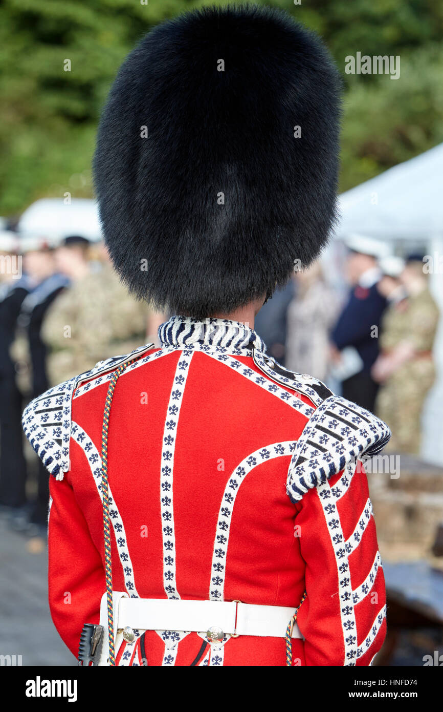 irish guards guardsman in full dress uniform with bearskin hat from the rear Northern Ireland - Stock Image