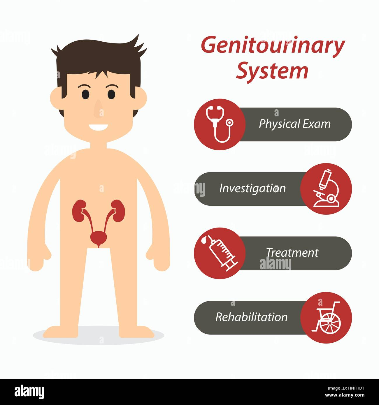 Genitourinary system and medical line icon ( flat design ) - Stock Image