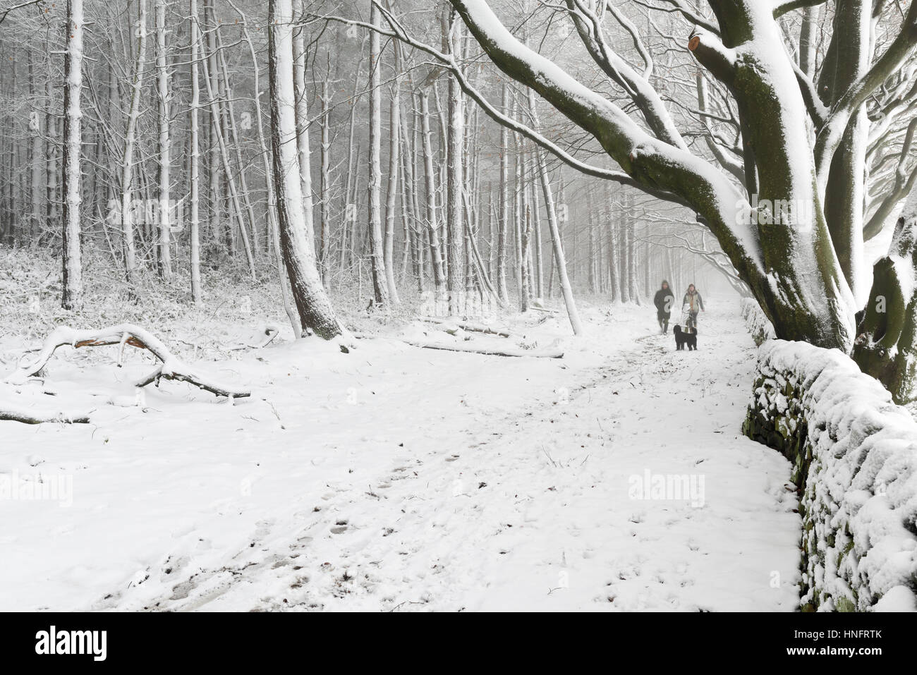 Matlock, Derbyshire, UK. 12th Feb, 2017. Heavy snowfall in the Derbyshire dales, near Matlock and surrounding areas.Derbyshire Stock Photo