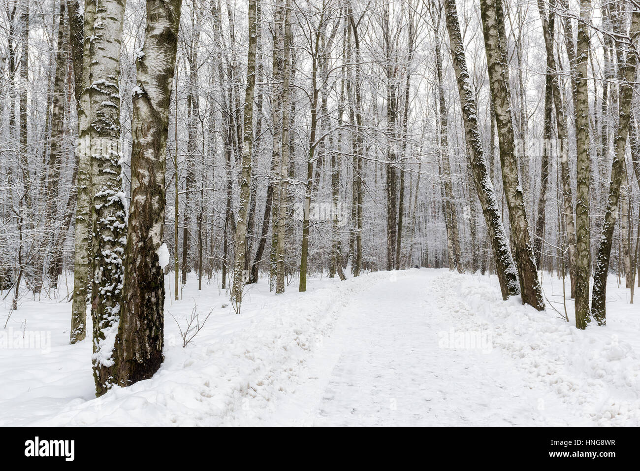 Snowy winter forest. Stock Photo