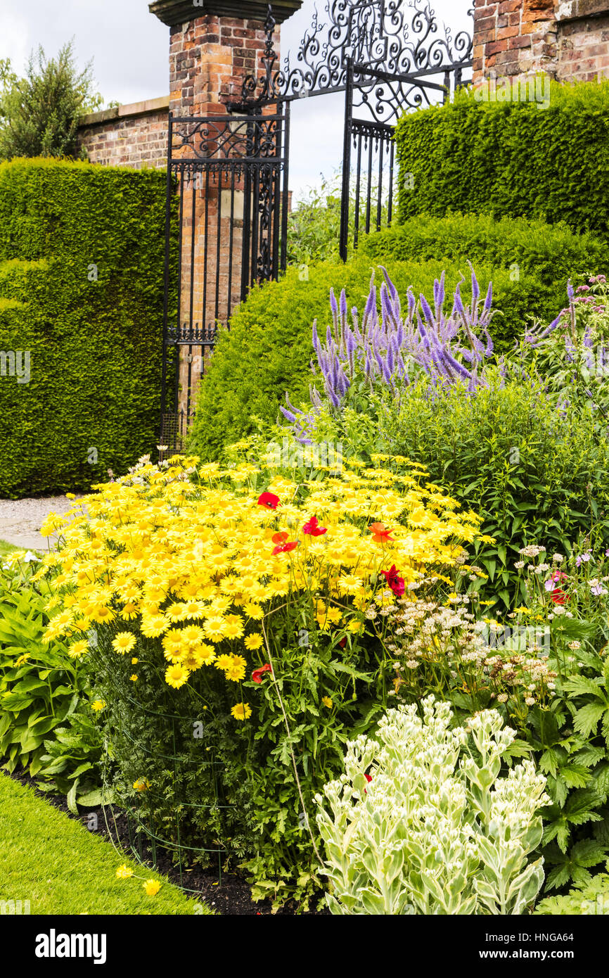 Herbaceous border in a well tended garden with perennial flowering plants. - Stock Image