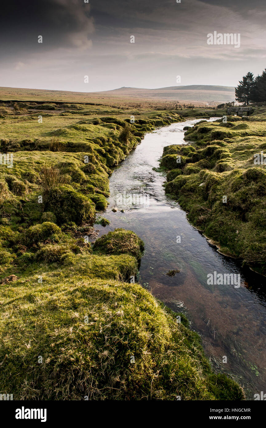 A small river runs through marshy ground on Rough Tor, designated as an area of Outstanding Natural Beauty on Bodmin - Stock Image