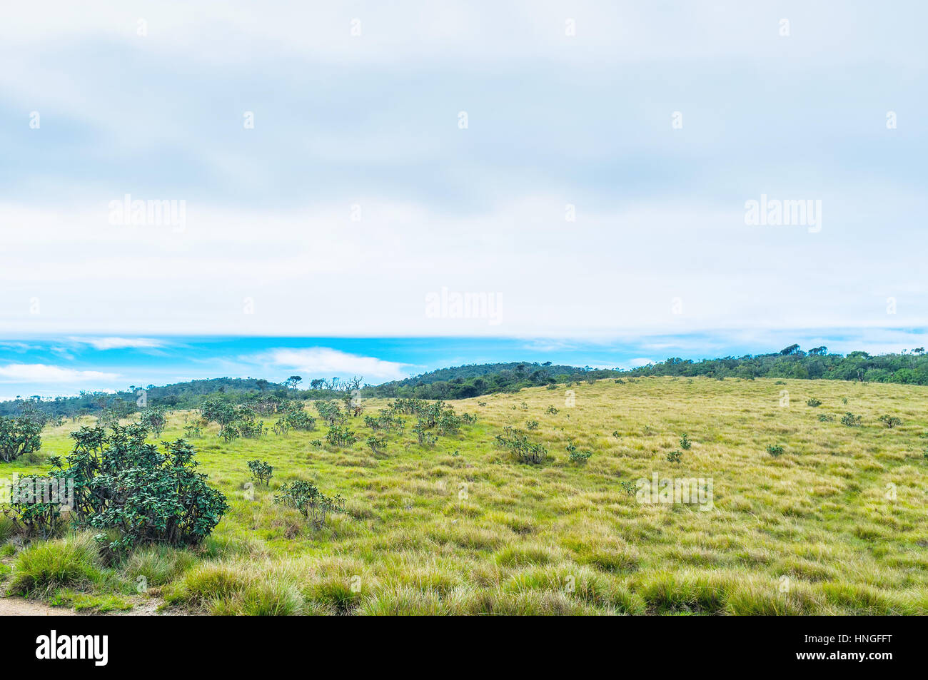 Almost third of territory of Horton Plains Park is grass covered with  rhododendron bushes, Sri Lanka - Stock Image