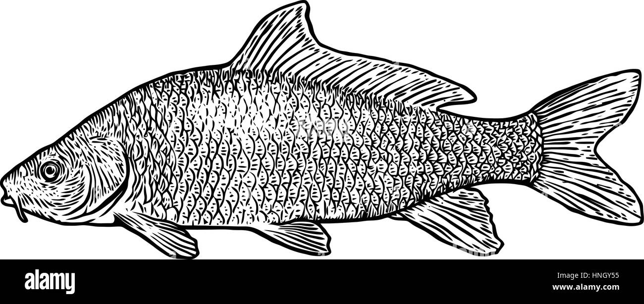 It's just a picture of Simplicity Realistic Fish Drawing