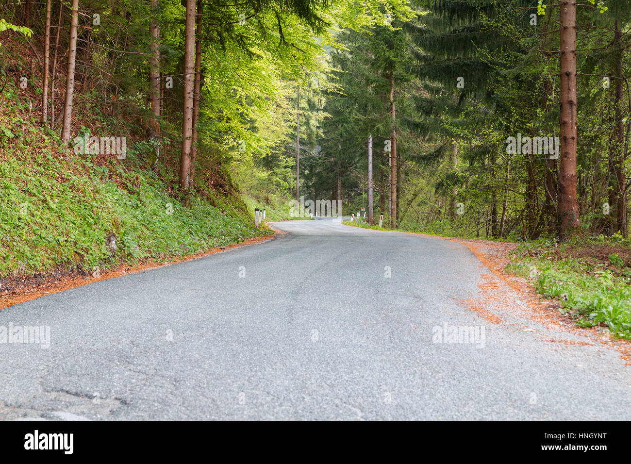 Winding woodland mountain road at spring in Slovenia,Europe Stock Photo