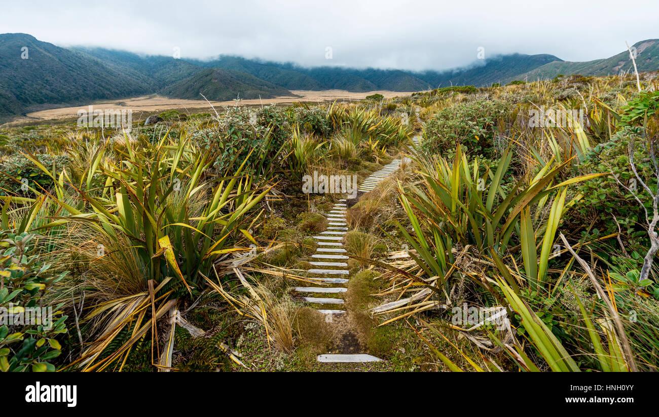 Trail through swampland, Pouakai Circuit, Egmont National Park, Taranaki, North Island, New Zealand Stock Photo