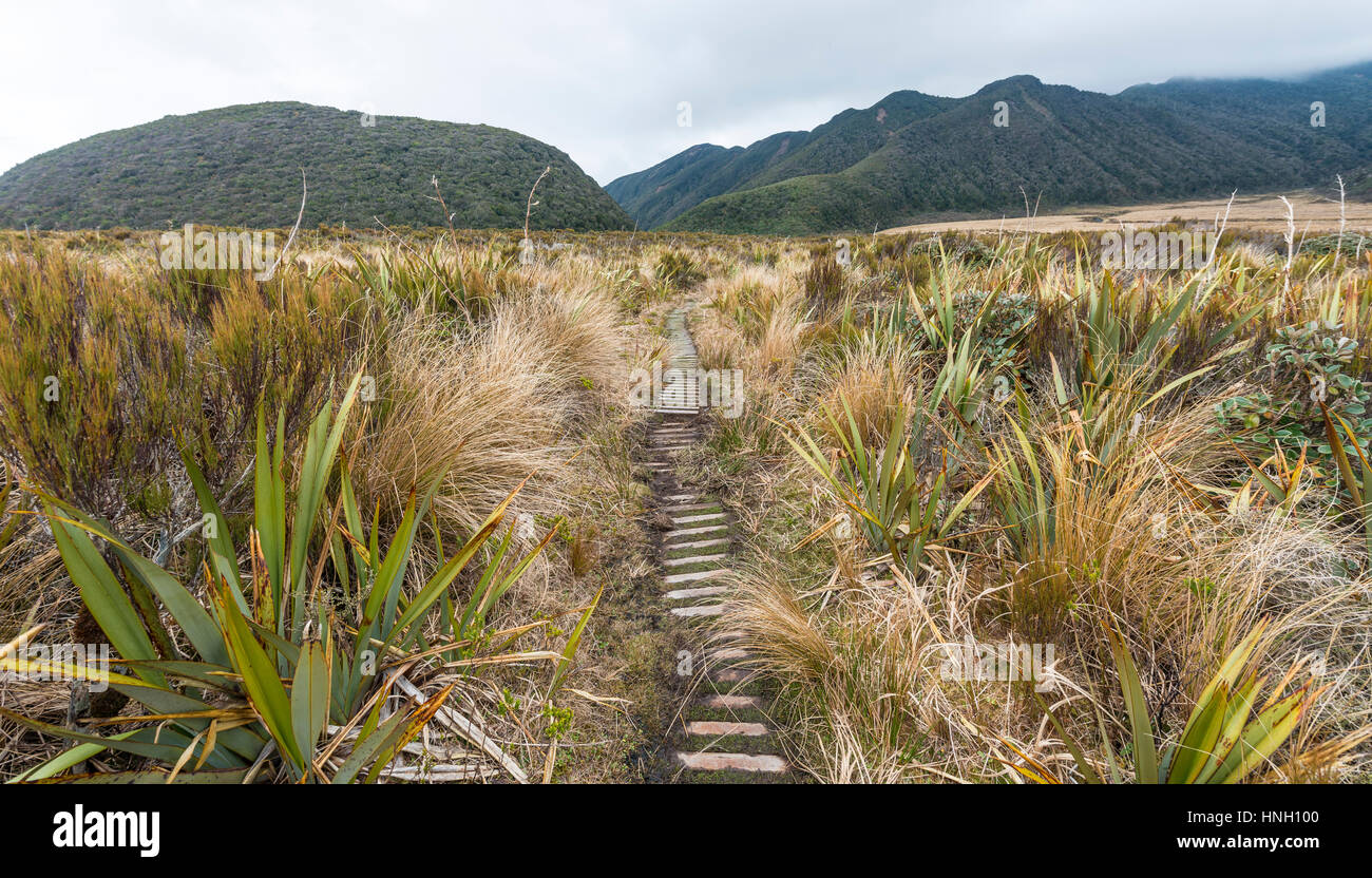 Trail through swampland, Pouakai Circuit, Egmont National Park, Taranaki, North Island, New Zealand - Stock Image