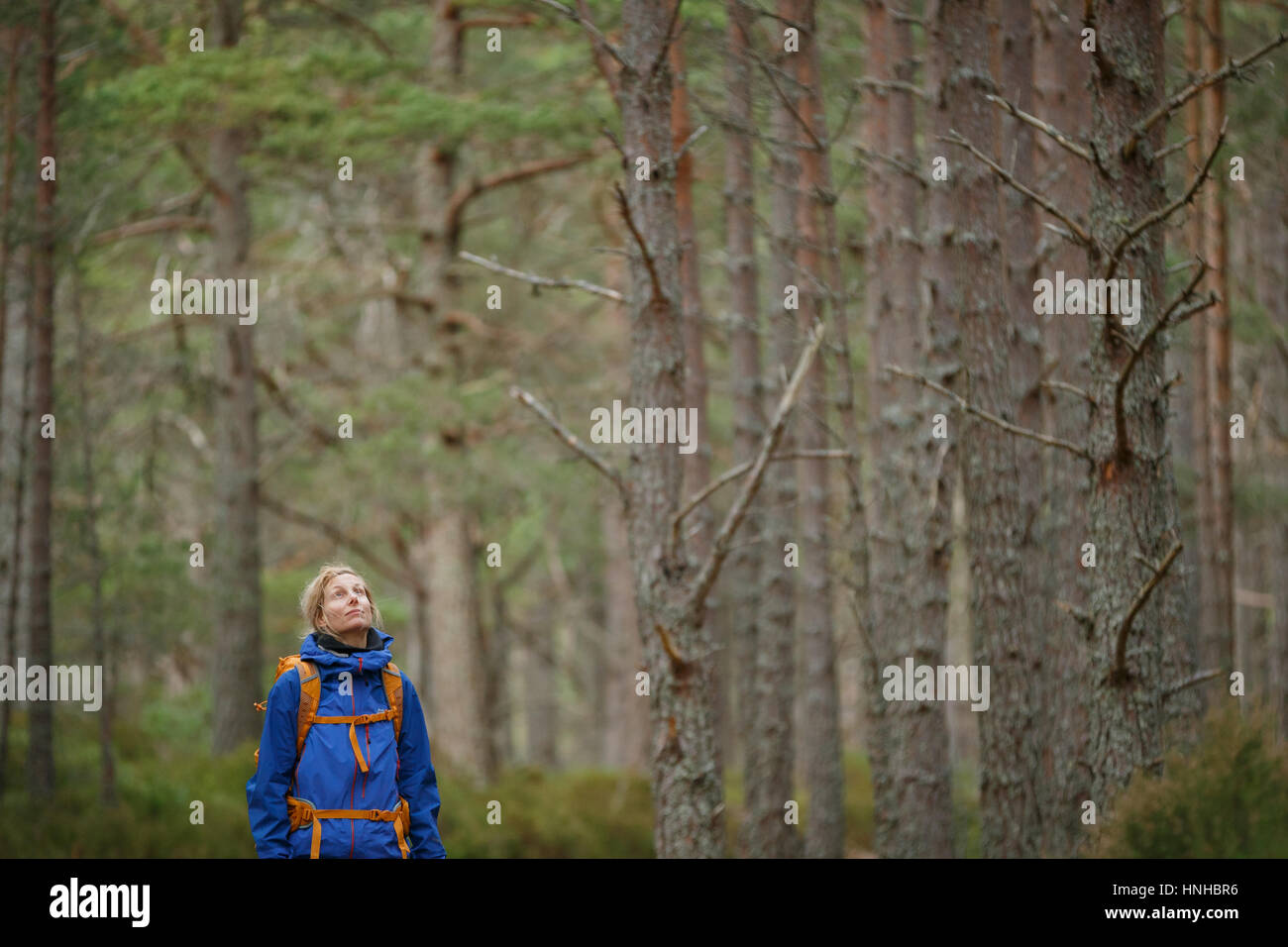 Woman hiking through a wood - Stock Image