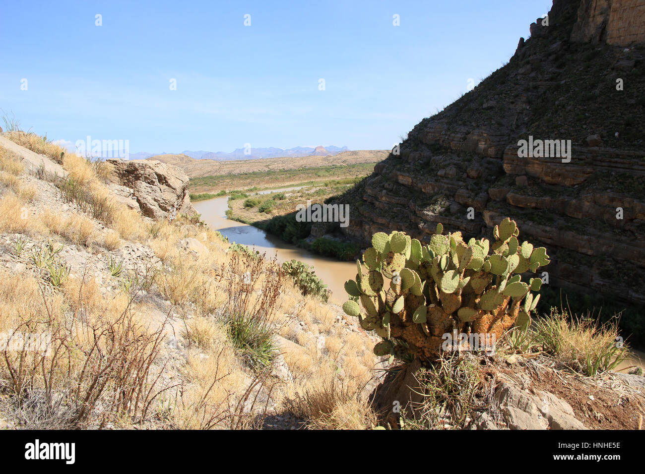 Cactuses clings to the rocky ground in Santa Elena Canyon, above the Rio Grande, which marks the Mexican Border, - Stock Image