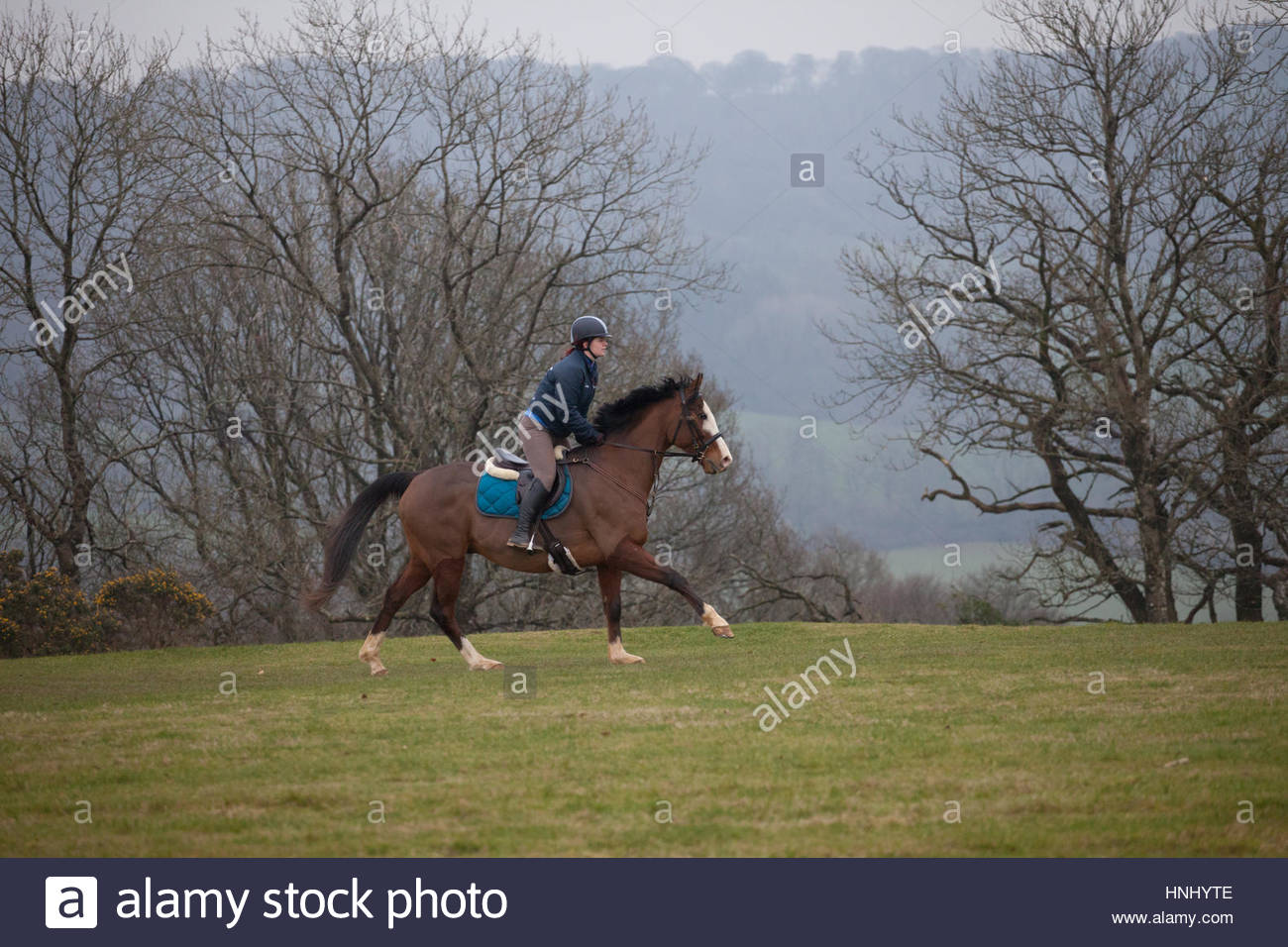 Blackdown Hills, East Devon, UK. 14th February 2017. Horse and rider enjoying a canter on an overcast and misty - Stock Image
