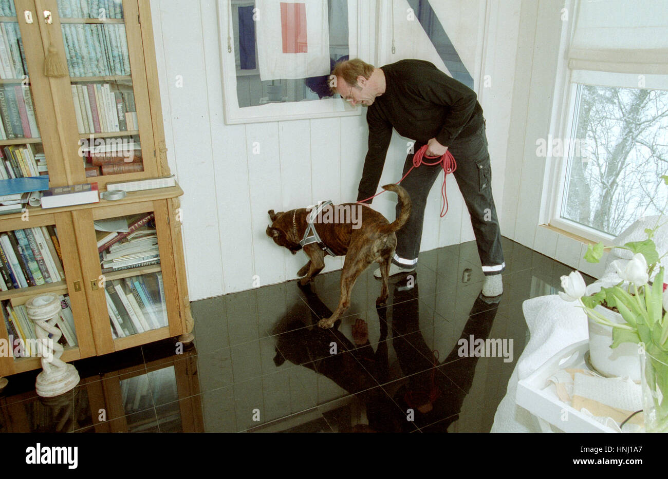 SNIFFER DOG looking mold in a homer 2010 after moister damage in a quite new house - Stock Image