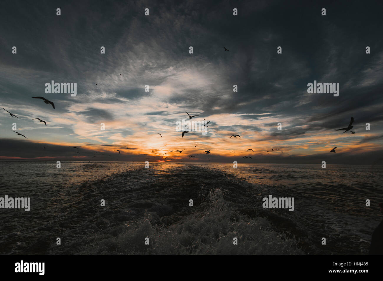 Birds flying over sea against cloudy sky during sunset Stock Photo