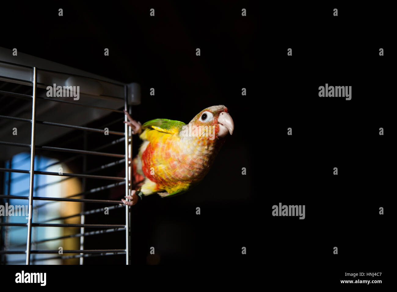 Parakeet Cage Stock Photos & Parakeet Cage Stock Images - Alamy