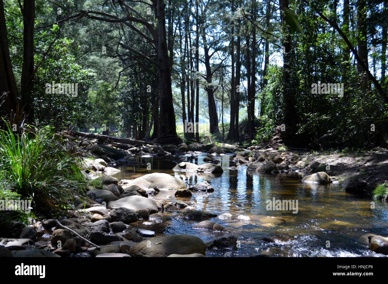 Capturing the beauty of natural bushland by the river in Australia - Stock Image