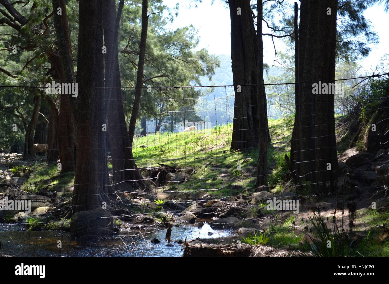 Wire fence looking very out of place in glorious river setting Australia - Stock Image