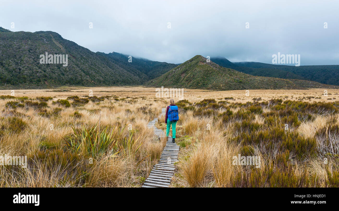 Hiker on trail through swampland, Pouakai Circuit, Egmont National Park, Taranaki, North Island, New Zealand - Stock Image