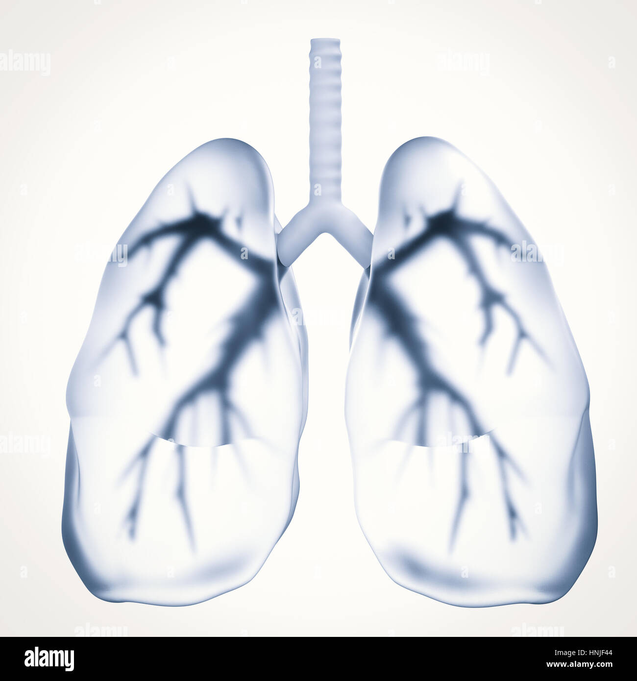 3d rendering black lungs or unhealthy lungs - Stock Image