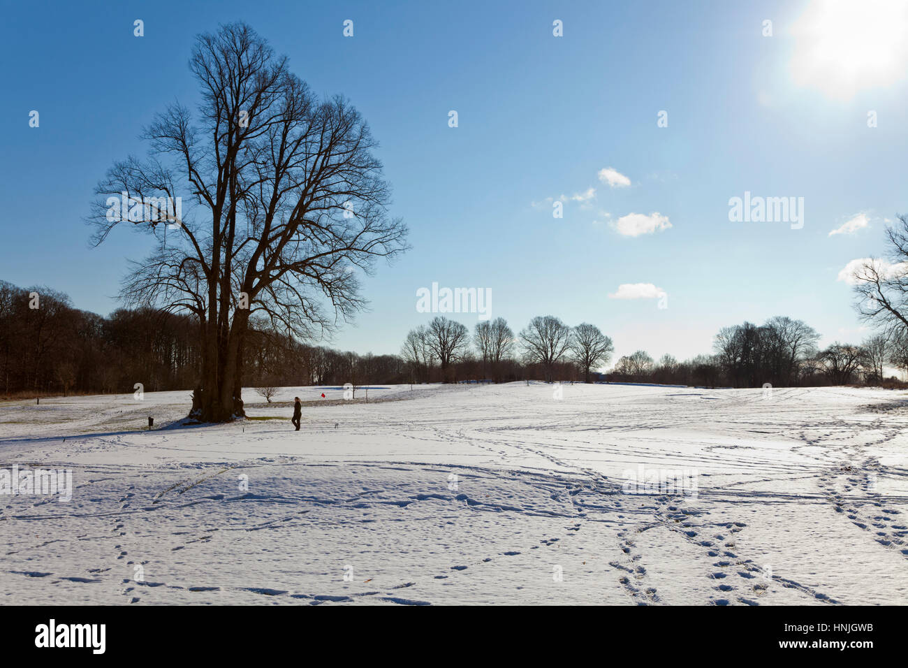 A sunny winter landscape, a blue sky, bare trees and patterns and circles of footprints on grass fields in snow - Stock Image