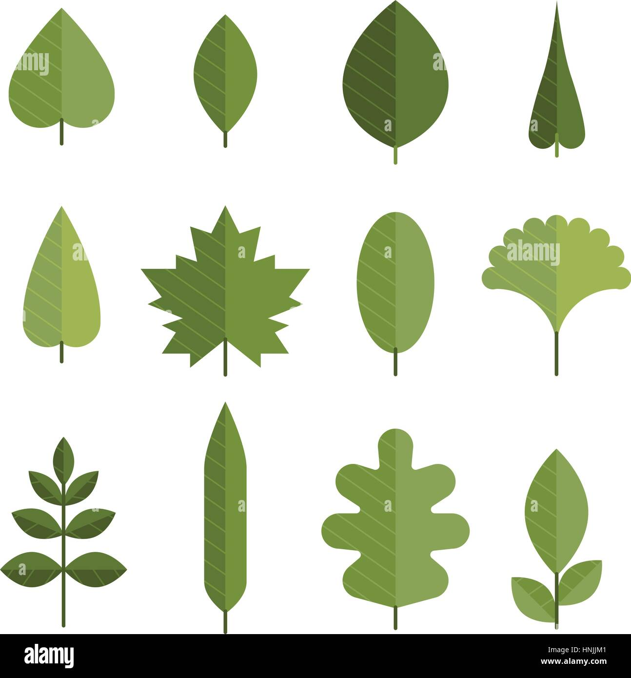 Set Of Flat Green Leaves Different Types Of Young Leaves From Trees Stock Vector Image Art Alamy