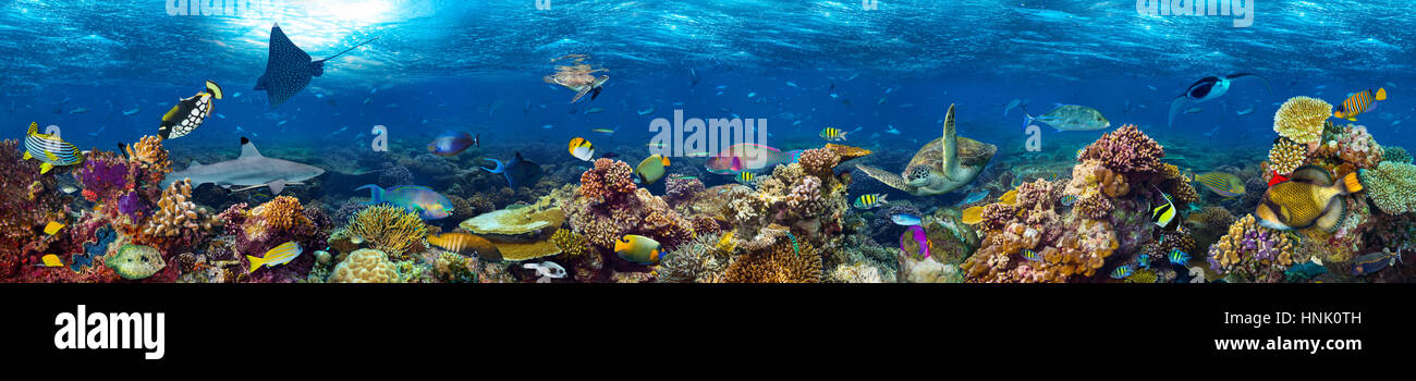 underwater coral reef landscape super wide banner background  in the deep blue ocean with colorful fish and marine - Stock Image