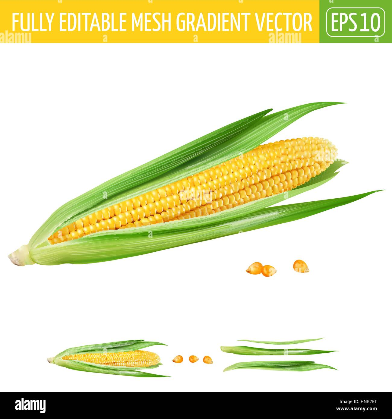 Corn on white background. Vector illustration - Stock Image