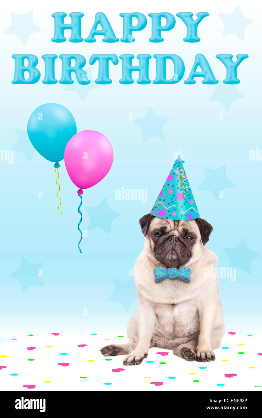 cute grumpy faced pug puppy dog with party hat, balloons, confetti and text happy birthday, on blue background Stock Photo