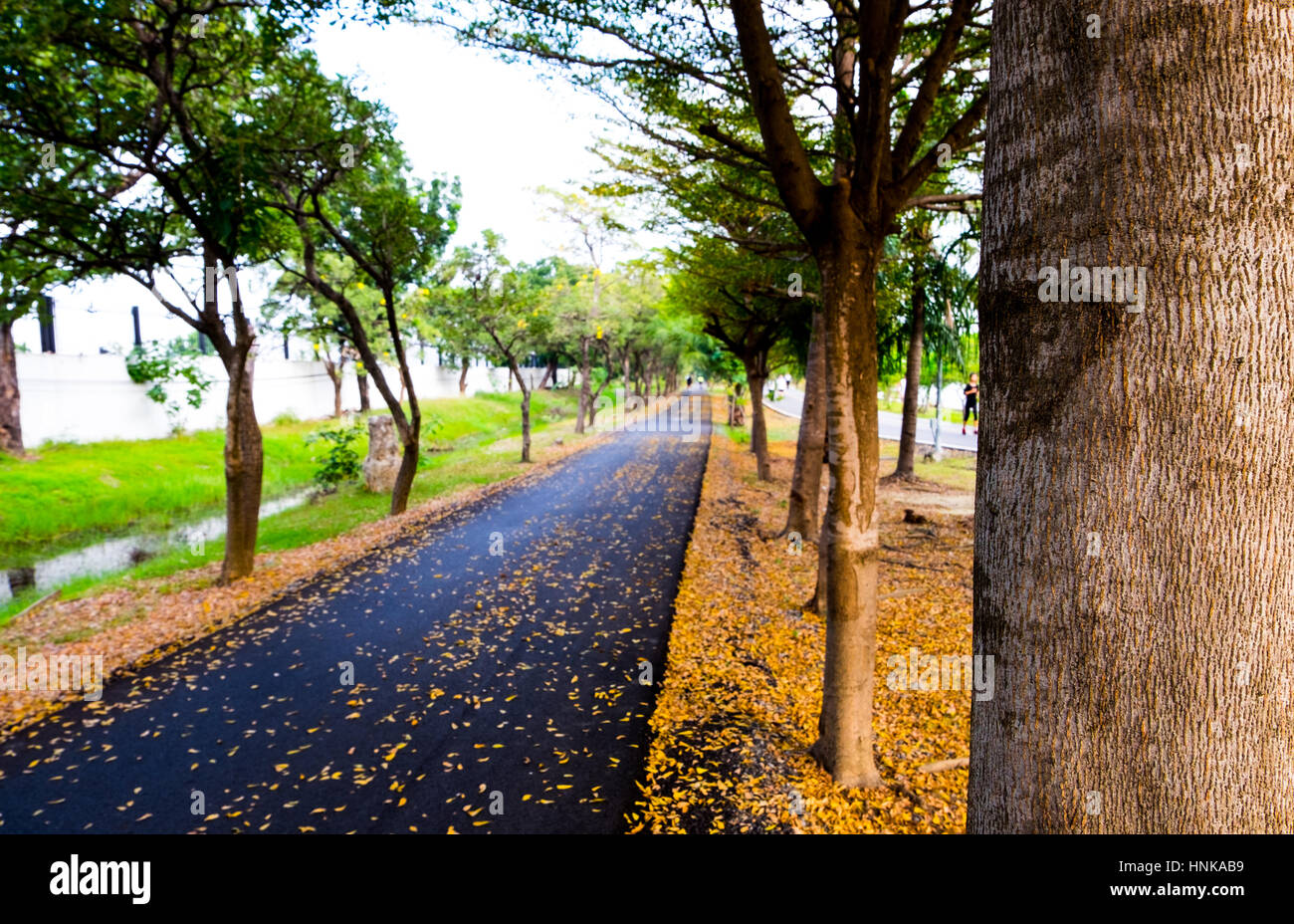 Asphalt running and bicycle lane in city park, autumn season, front focus blurred background - Stock Image