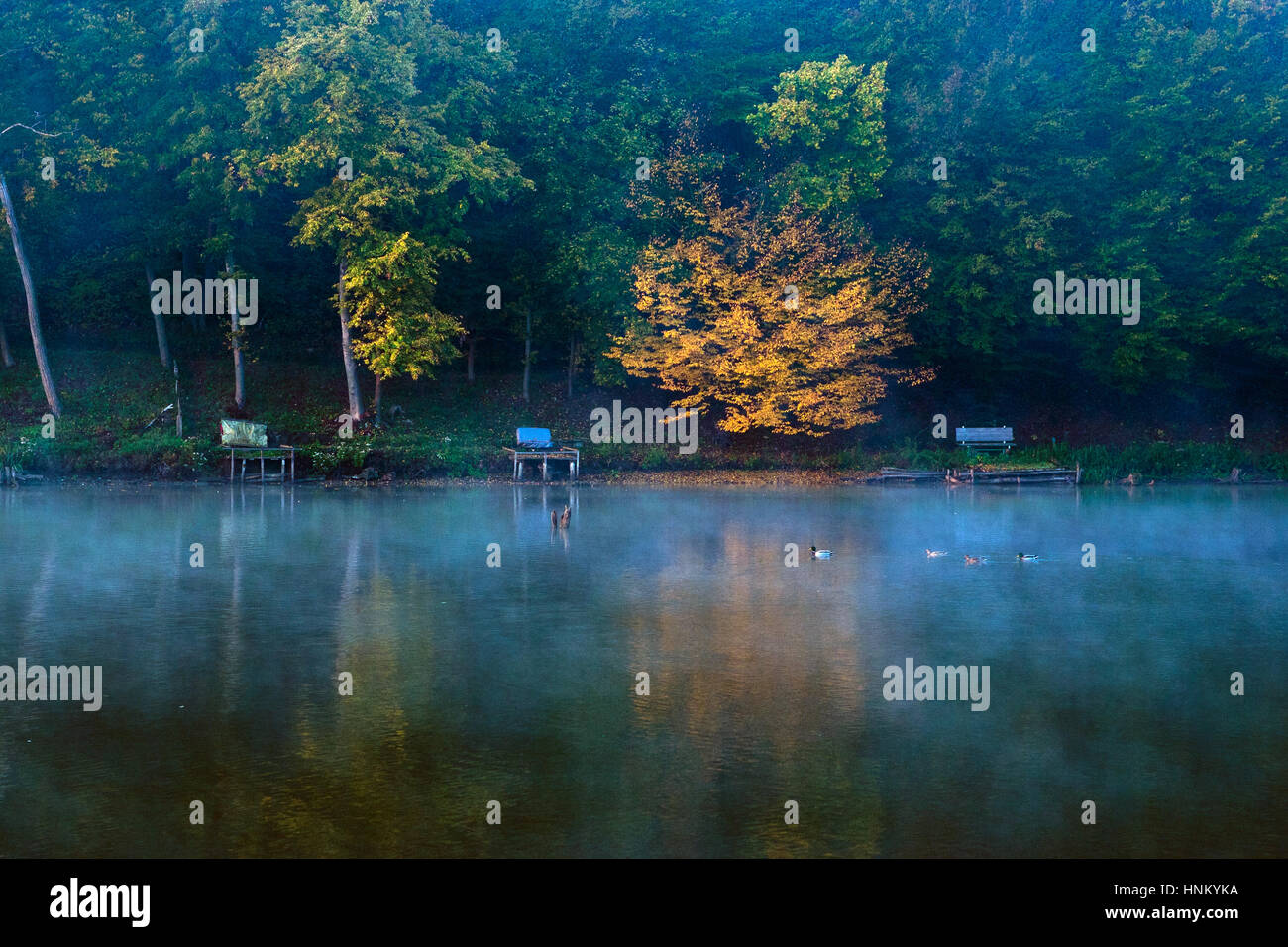 Autumn scene with lake and forest in sunset - Stock Image