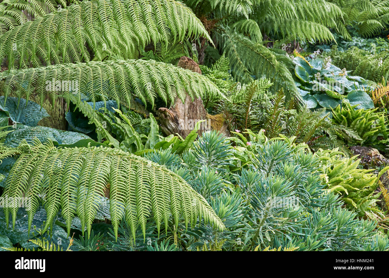 Evergreen foliage planting with ferns - Stock Image