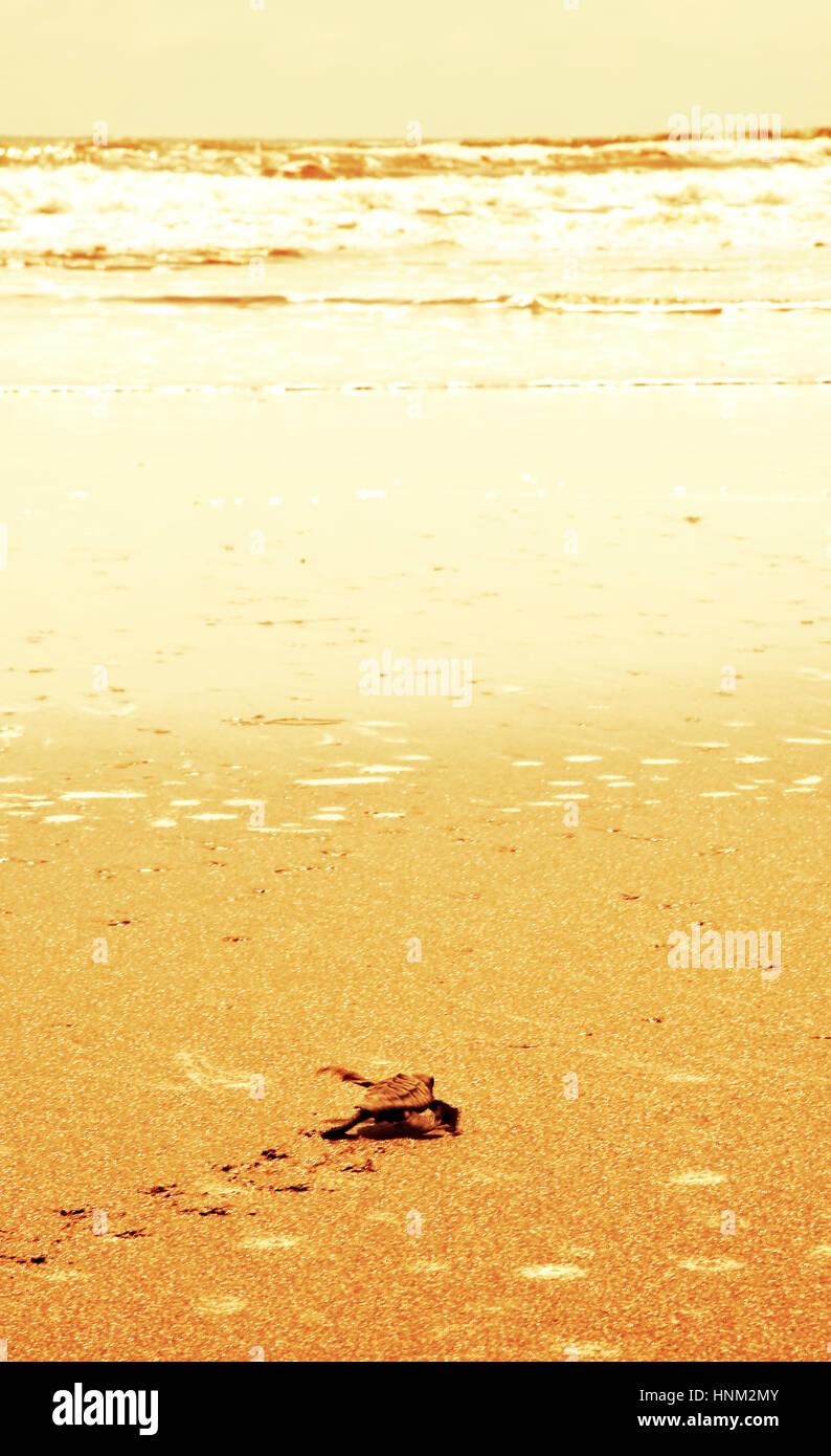 Turtles on the beach - Stock Image