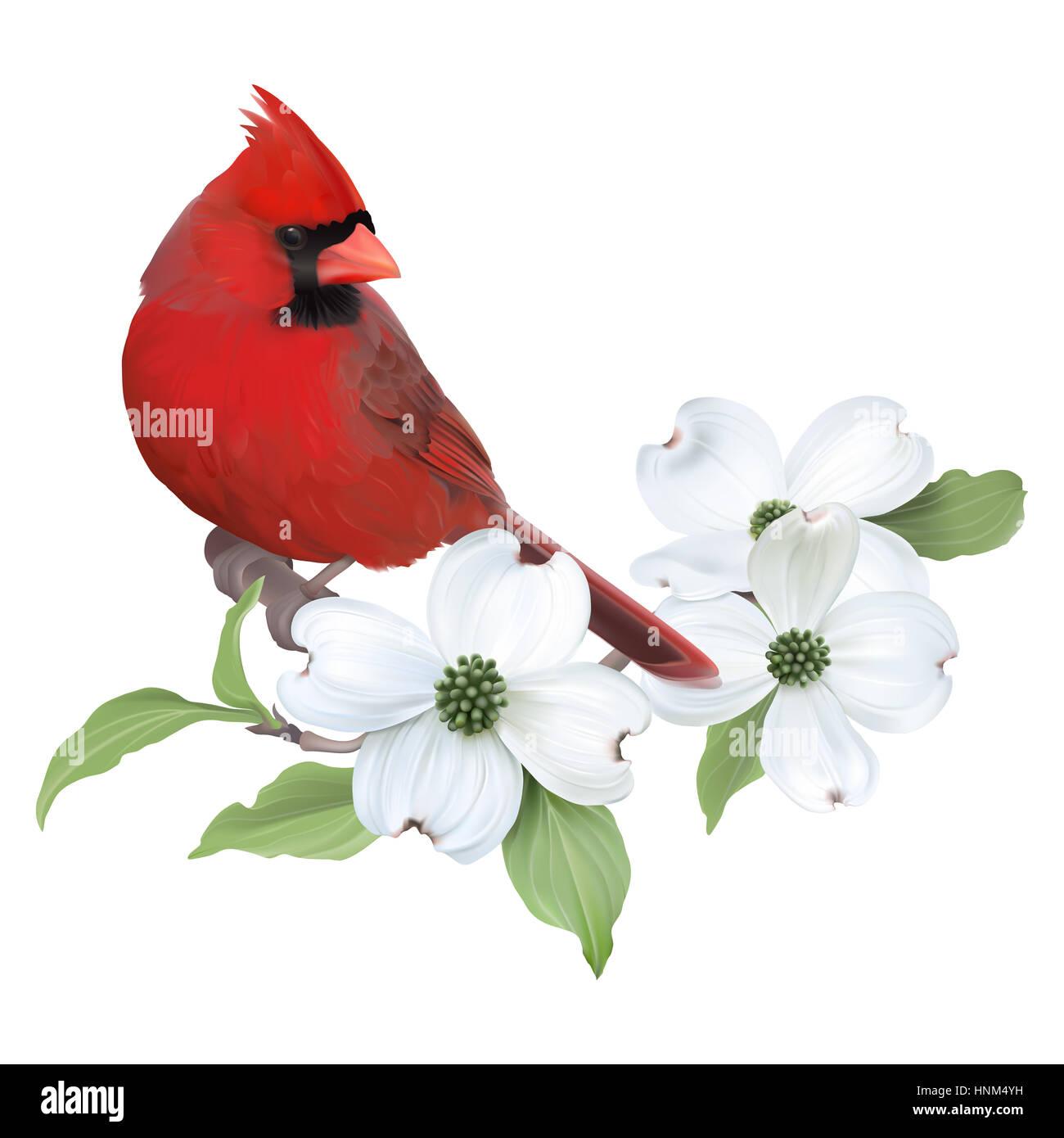 Cardinal Flower Bird Stock Photos Cardinal Flower Bird Stock